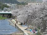 f1040 四月上旬、芦屋川で