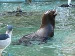 fz3_007 動物園に何故かアシカ